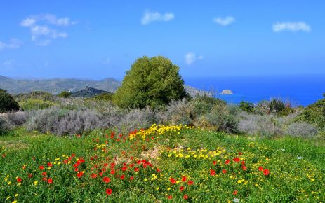 Spring has begun in Cyprus