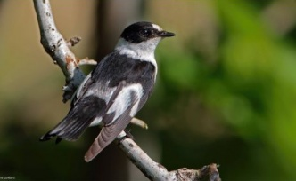 There are 385 different bird species found in Cyprus from past to present